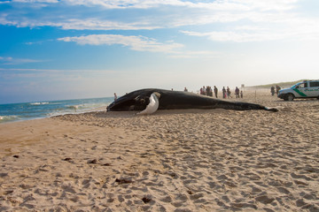 Beached Whale in Sand