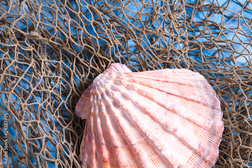 Leinwanddruck Bild Seashell on fishing net