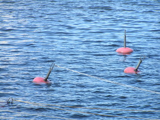 Buoys in blue water
