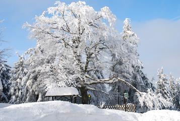 Winterbaum Auersberg Erzgebirge