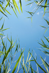 beautiful fresh green grass against the blue sky in view frame