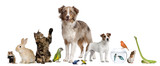 Fototapety Group of pets together in front of white background
