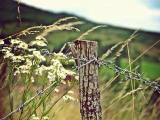 Natur und Maschendrahtzaun