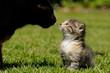 Katzenkind mit Katzenmutter