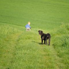 Junge mit Deerhound