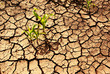 Plant survivals in cracked earth - 24400792