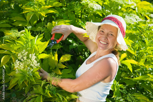 senior woman cutting  cornus