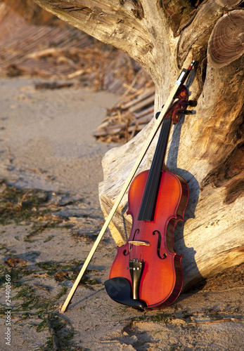 Violin Leaning on a Old Stump