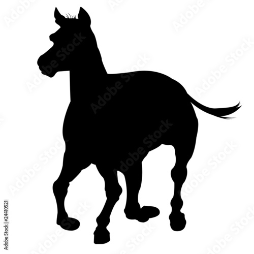 horse silhouette isolated on white