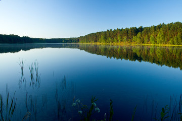 Summer landscape at the lake and forest with mirror reflection