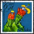 POLAND - CIRCA 1981 Nopalea