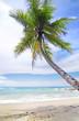 Fototapeten,palme,hintergrund,bellen,strand