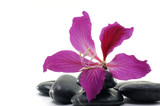 Wellbeing-tropical red flower with black pebbles poster