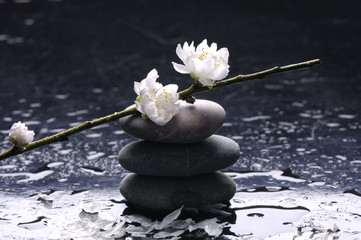 Stacked therapy stones and blooming cherry with water reflection