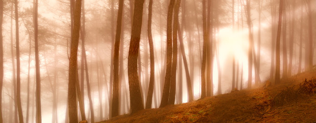 Early morning fog in the forest at sunrise