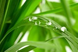 water drops on the green grass-