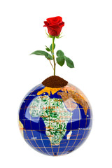 Globe and rose flower