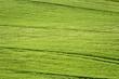 champs verts
