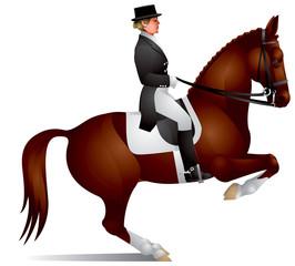 Dressage horse perform figure levada