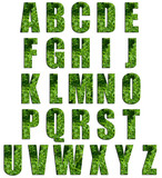 Parsley Texture Alphabet