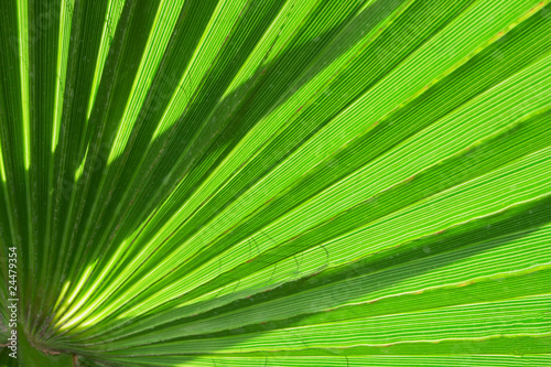 palm leaf as background