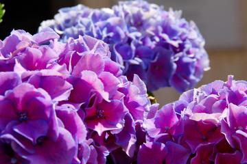 flower #161