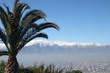 Palmier à Santiago