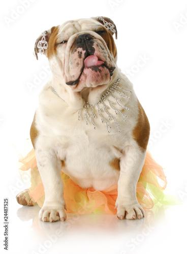 Poster female dog