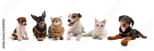jeunes animaux de compagnie