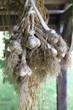 Erntefrischer Knoblauch