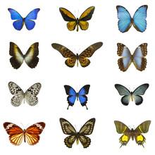 12 different butterflies