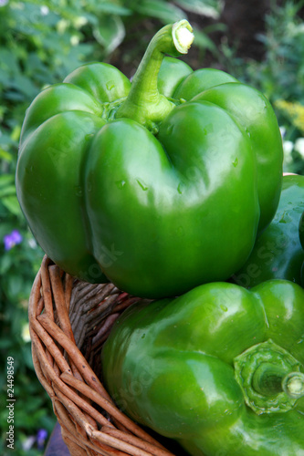 Freshness green pepper