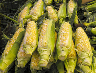 Organic Corn for sale at farmers market