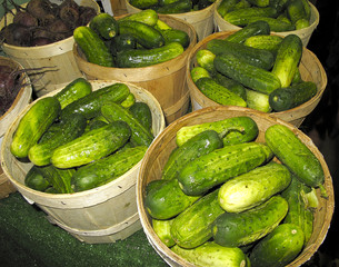 Pickling Cucumbers at Farmers Market