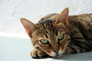 Katze im Sonnenlicht