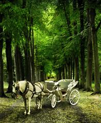 Kutsche im Wald
