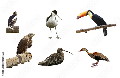 Canvas Toekan Exotic birds on white background