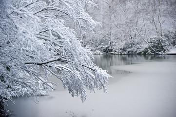 Branch over frozen lake