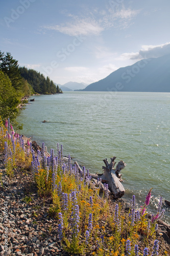 View of the Squamish River in British Columbia, Canada Poster