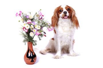 Cavalier King Charles Spaniel sitzt bei einer Blume