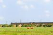 Dutch train in landscape