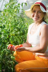 woman is picking tomato
