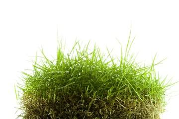 Mound of zoysia wet grass