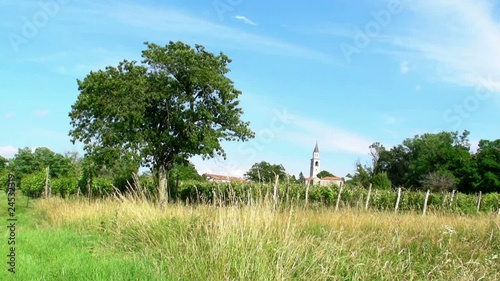 Tree, field and church