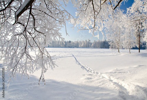Foto op Canvas Landschappen Winter park in snow