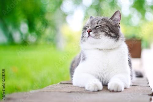 sliczny-kot-cieszy-sie-outdoors