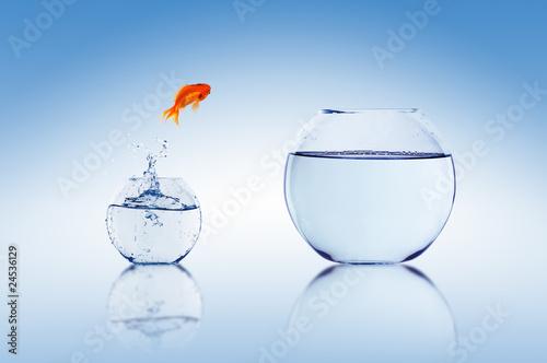 Goldfish jump - 24536129