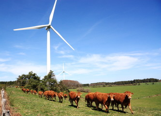 Wind Turbine and Cattle horizontal