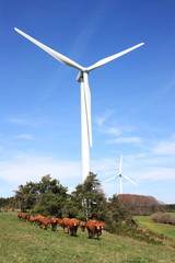 Wind Turbine and Cattle vertical
