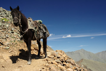 Mountain horse-riding